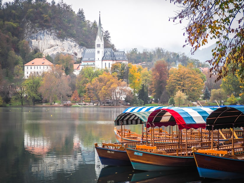 A group of pletnas at the side of Lake Bled in autumn