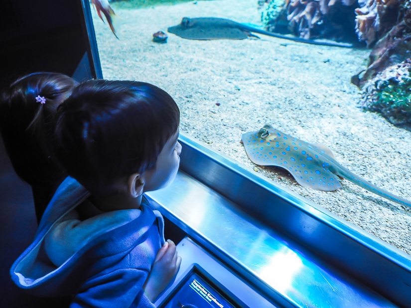 My son looking at a sting ray in the aquarium of Haus der Natur (Museum of Science and Technology) in Salzburg