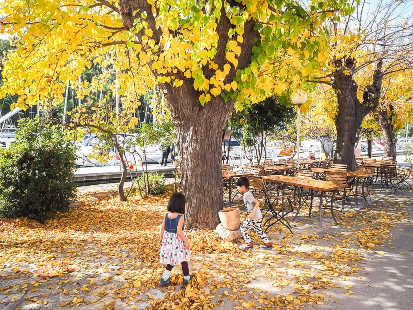If you're visiting Skradin in October (or Skradin in November), you'll find the leaves changing colors like in this photo