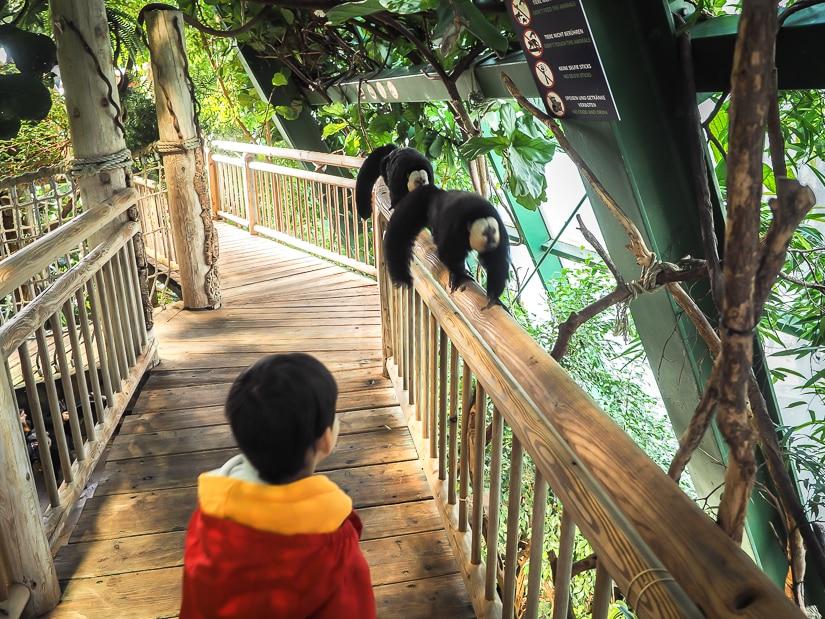 Seeing monkeys at Vienna Aqua Terra Zoo with kids