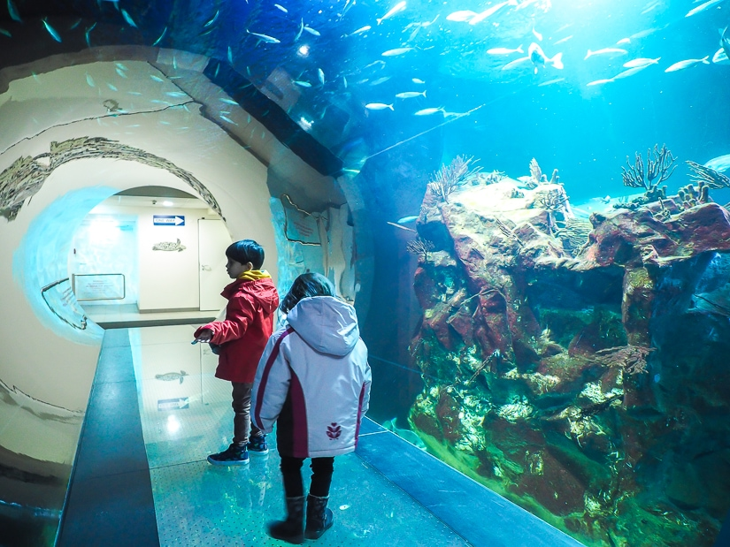 Atlantic Tunnel of fish at the Vienna Aquarium, which we visited with kids