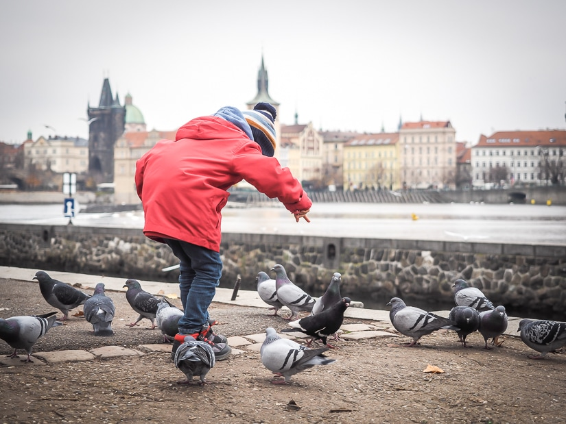 My son playing with pigeons by the riverside in Prague