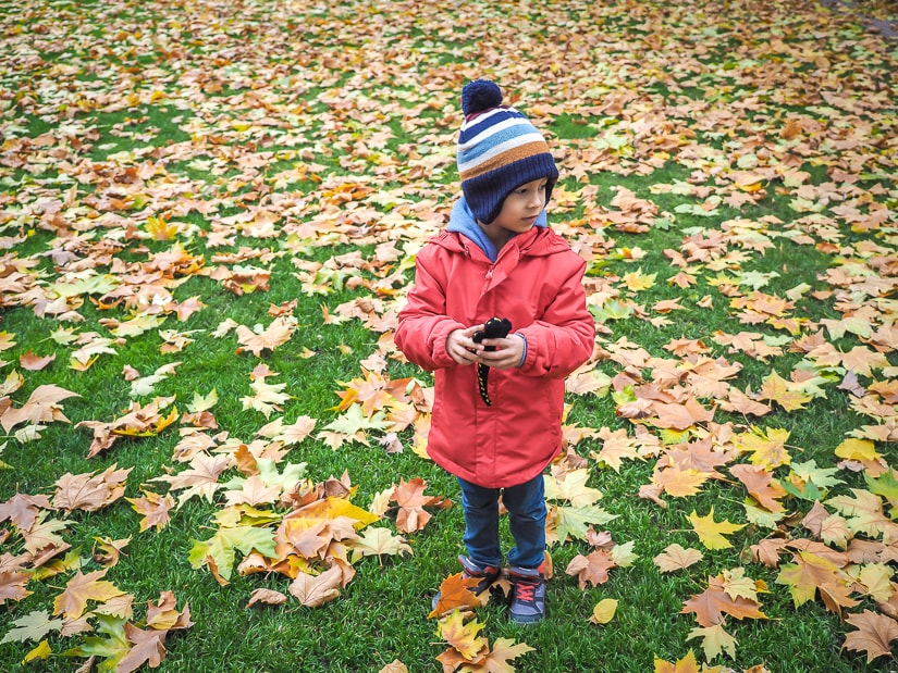 My son standing in a field surrounded by fallen leaves