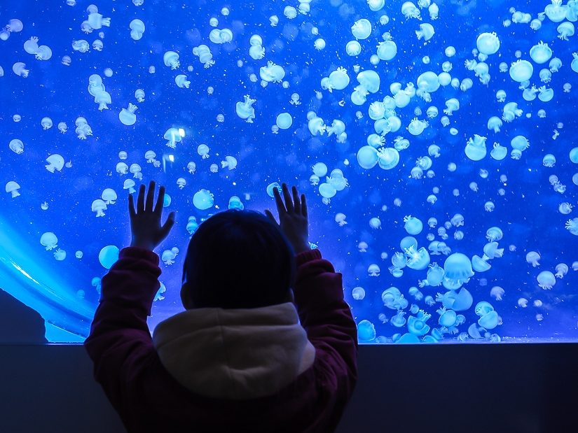 Visiting Haus des Meeres (Vienna Aquarium), one of the best places to visit in Vienna, Austria with kids