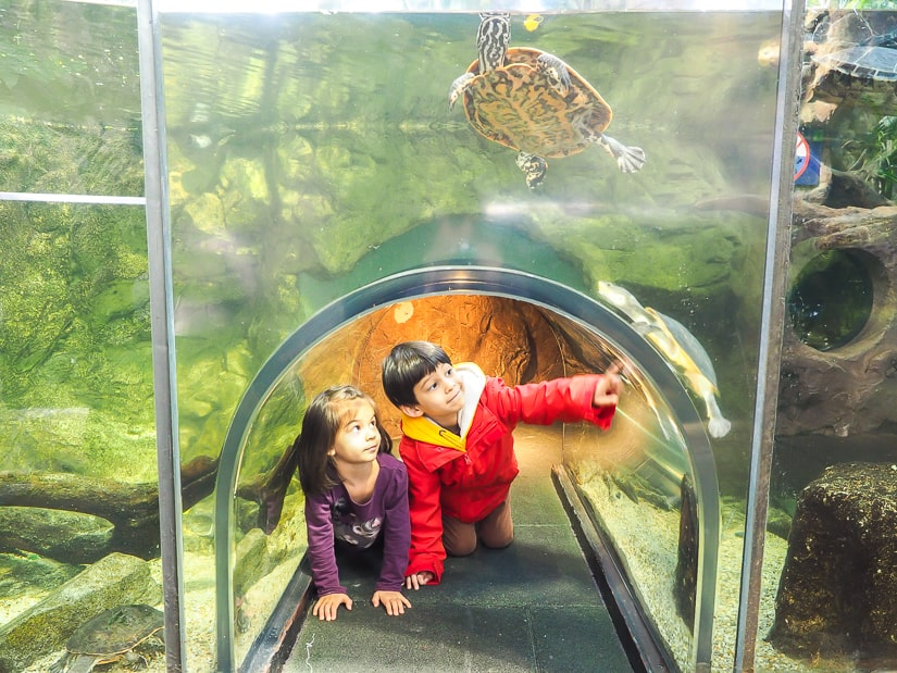 Our kids in a glass tunnel looking at turtles at the House of the Sea (Vienna Aquarium)