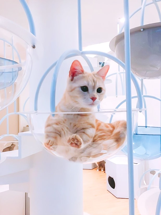 Kitty in a cat cafe in Yilan