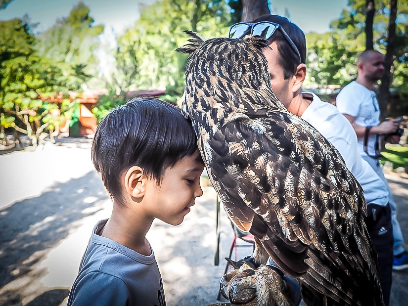Visiting the Falcon Centre in Croatia with our kids, and my son is rubbing his face against an eagle owl