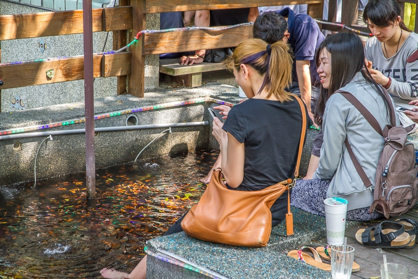 Fish nibbling on people's skin in a foot soaking hot spring tub in Tangweigou hot spring park, one of the quirkiest things to do in Yilan