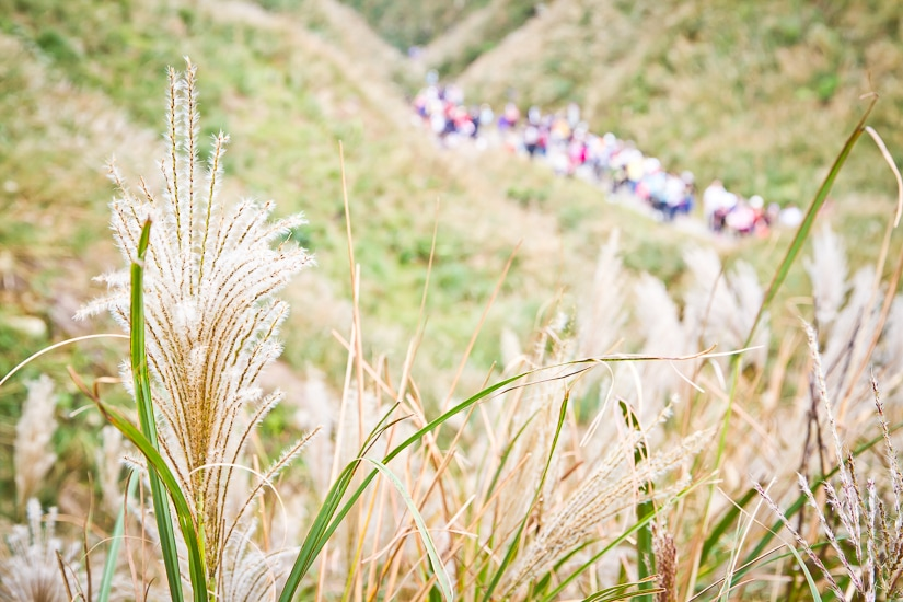 Silvergrass and crowds of hikers on Caoling Historic Trail in Autumn (november) in Taiwan