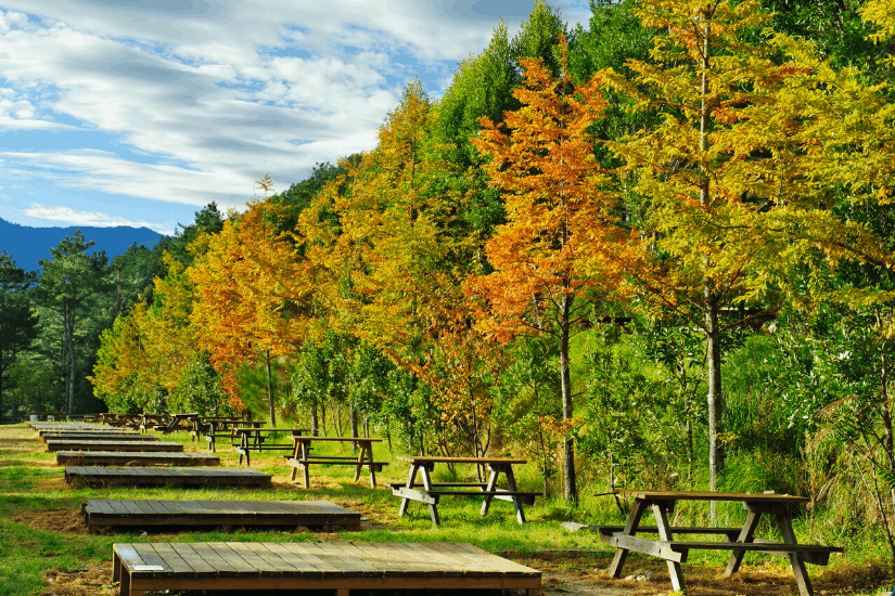 Wuling Farm, one of the best places to see fall colors in December in Taiwan