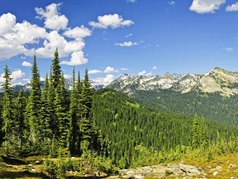 Mount Revelstoke National Park, one of Canada's best national parks