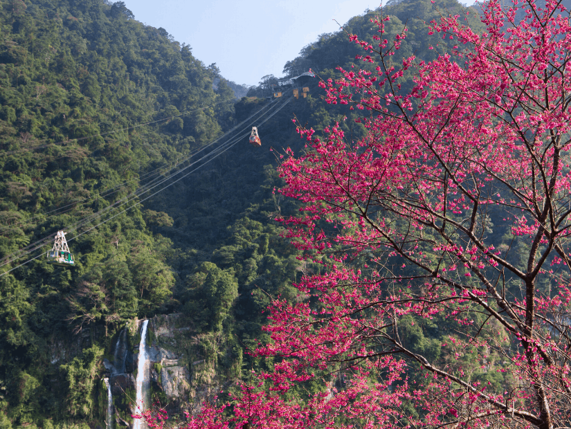 Wulai Gondola, Wulai Cable Car, and cherry blossoms in Wulai