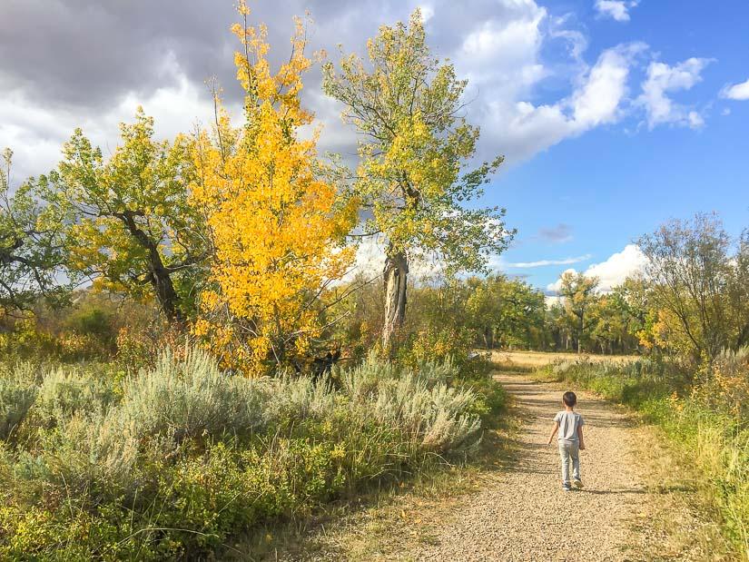 Autumn foliage on the Cottonwood Flats Trail