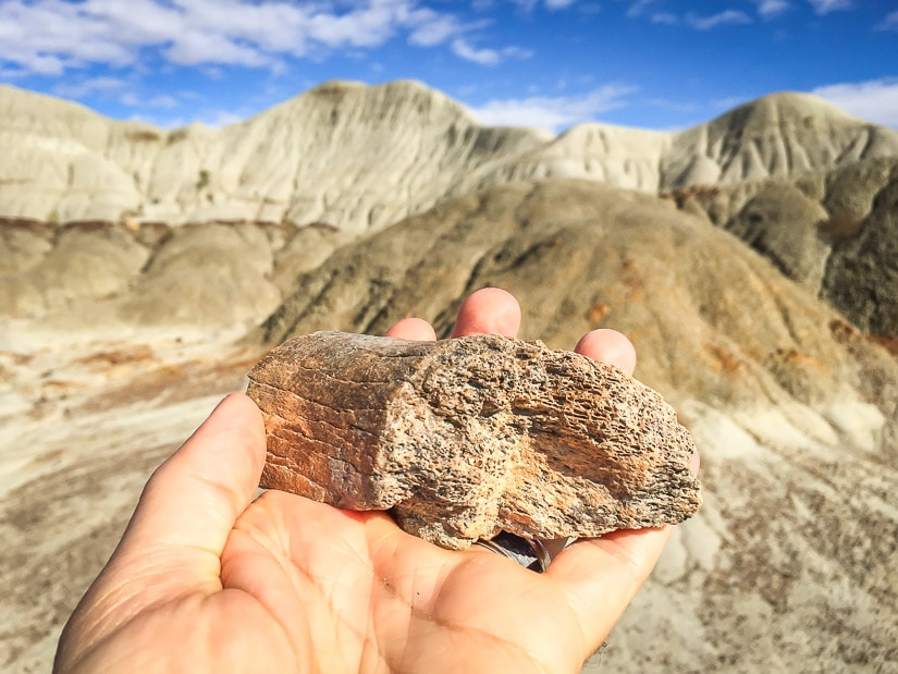 My hand holding a dinosaur bone with badlands scenery in the background