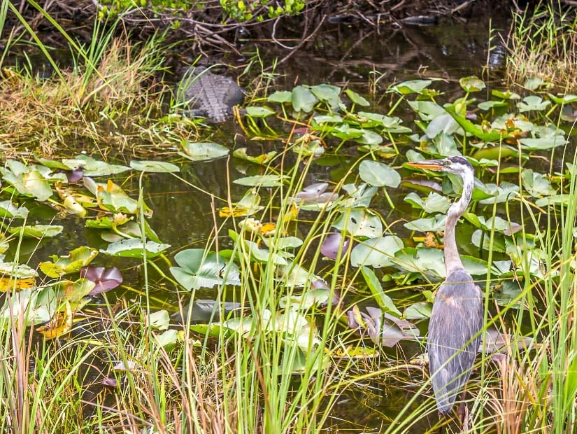 Wildlife in the dry season of Everglades National Park