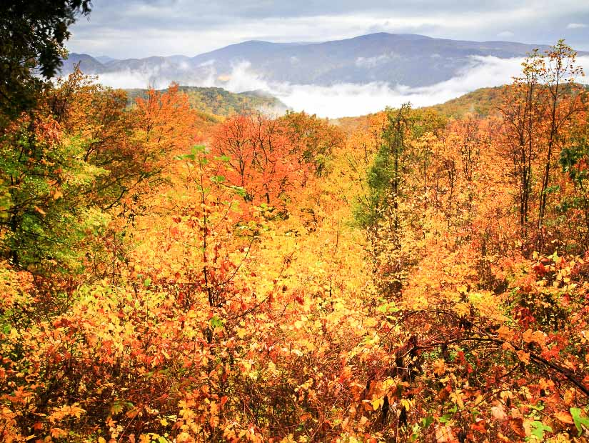 Autumn foliage in Great Smoky Mountains National Park