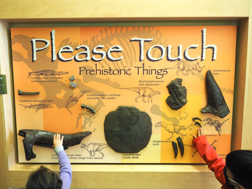 An interactive dinosaur fossil display inside the Dinosaur Park Museum with two kids touching it