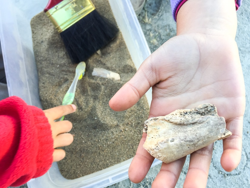Kid's hand holding a dinosaur fossil above a box of sand