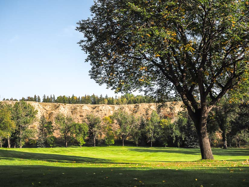 Field, tree, and cliffs at Kin Coulee Park in Central Medicine Hat