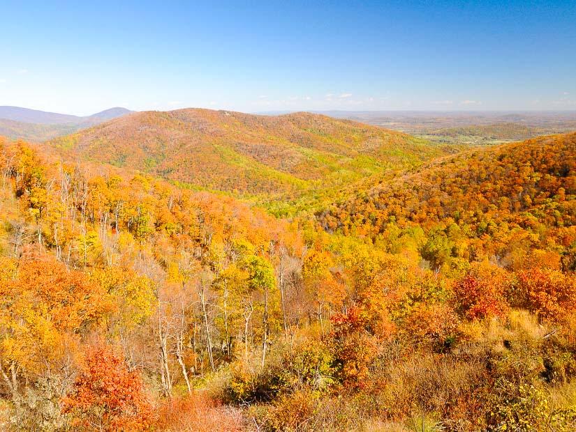 Beautiful fall colors of Shenandoah National Park