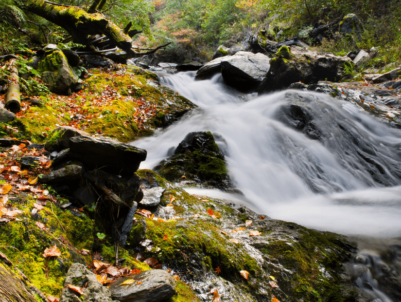 A forest stream and waterfall surrounded by autumn foliage