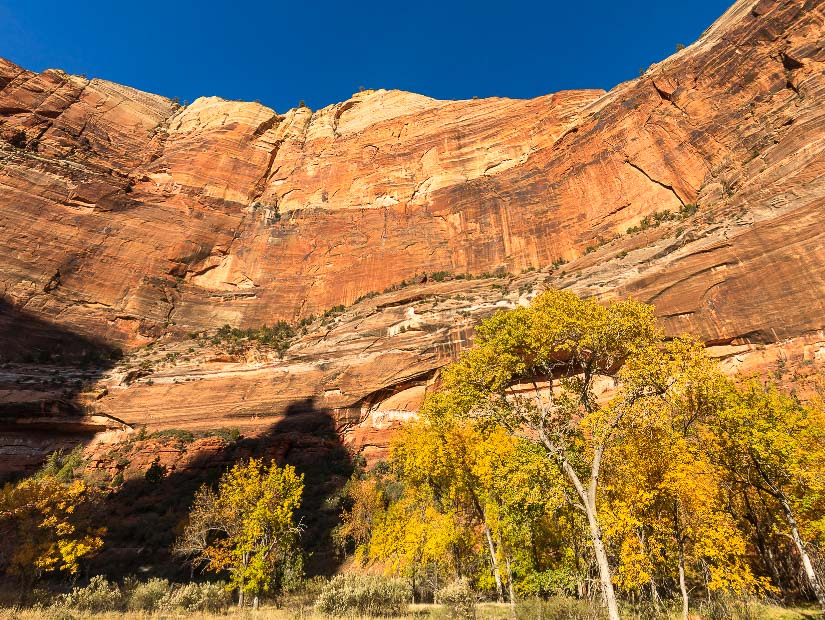 Sheer vertical cliff of Zion National Park, USA in autumn