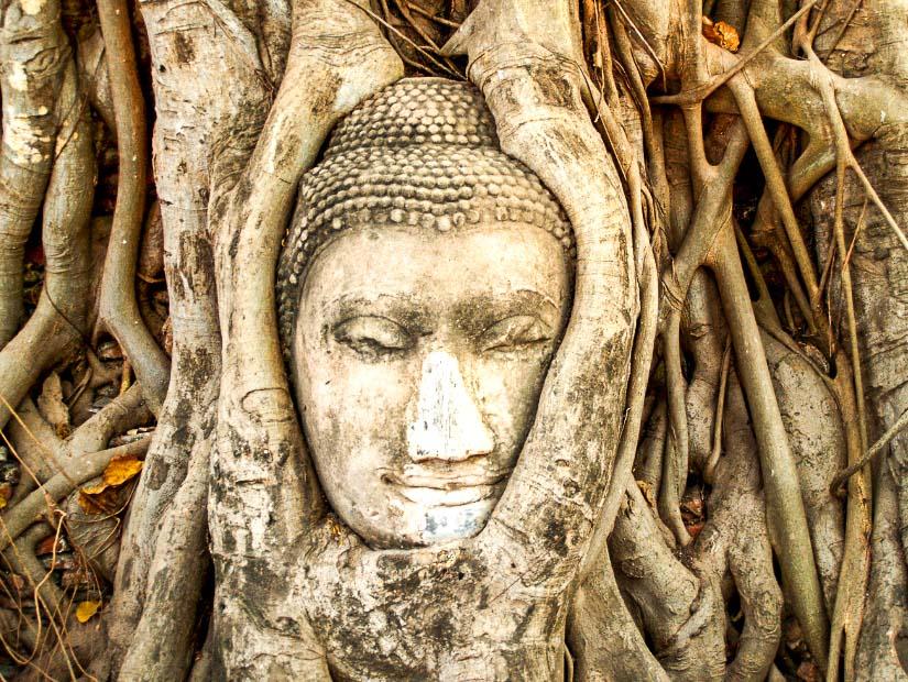 Stone buddha face in banyan tree at Ayutthaya, Thailand