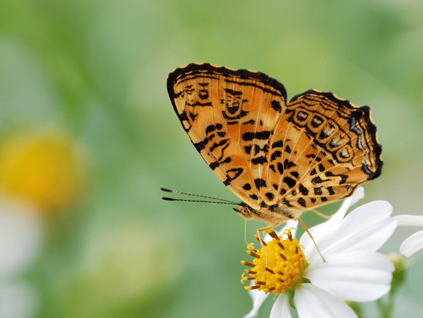 Butterfly on a flower at Fuyuan National Scenic Area in Hualien County