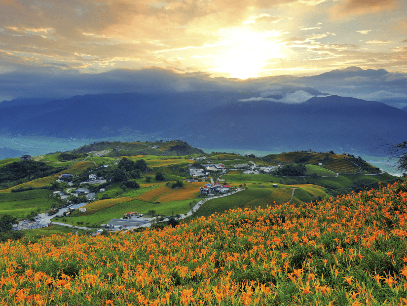 Mountain covered in lilies at Liushishishan (Sixty Stone Mountain) in Hualien