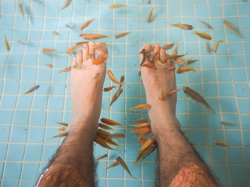 Hot spring fish that eat the dead skin off your feet