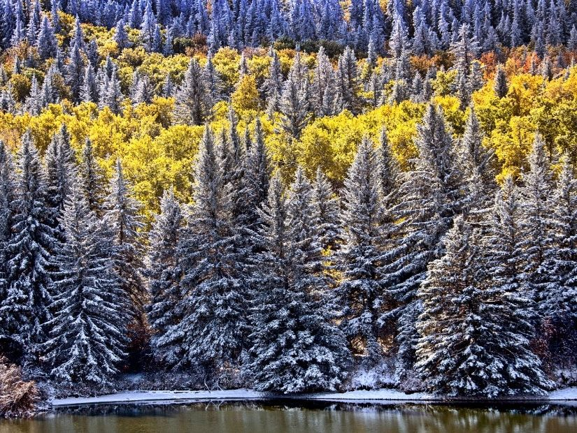 Wintry view of a lake and forest in Cypress Hills, one of the best places to visit in Alberta