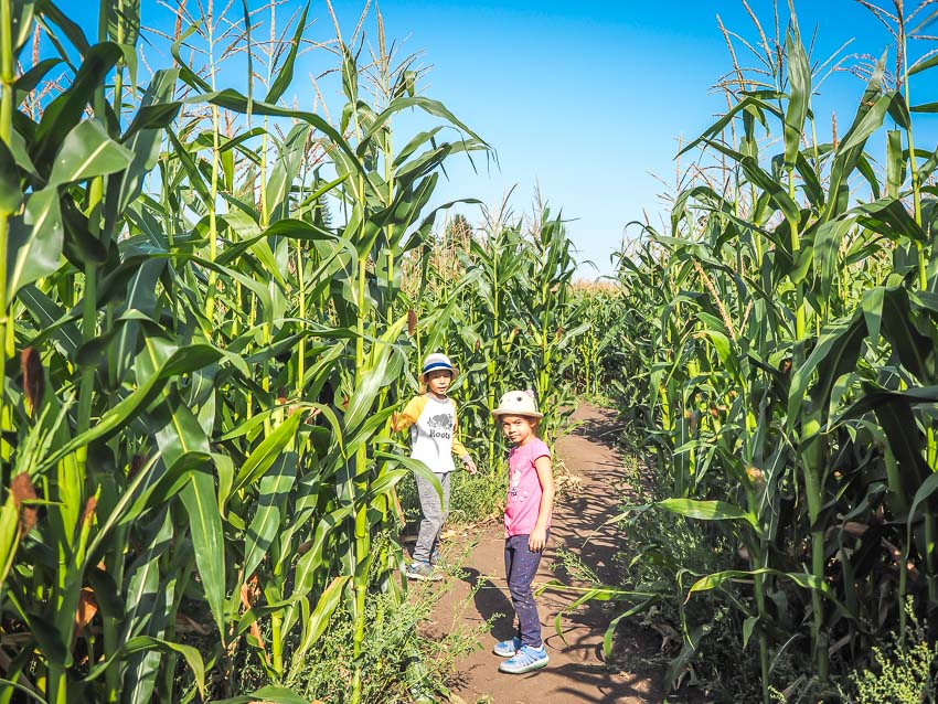 Two kids standing in a corn maze
