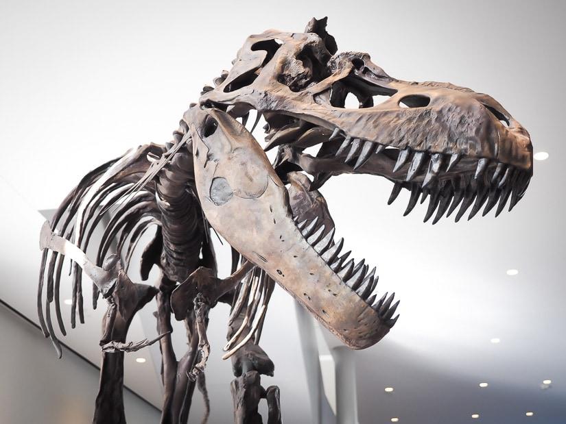 Albertosaurus in the lobby of the Royal Alberta Museum in Edmonton